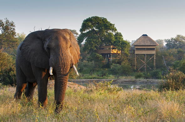 Elephant spotted adjacent to Pondoro Game Lodge.